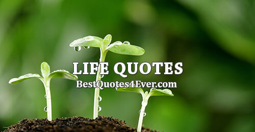 Life Quotes, Sayings and Messages Collection